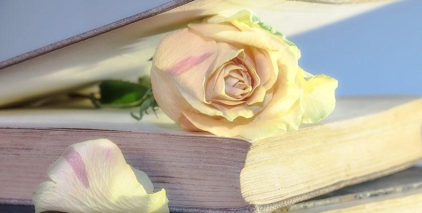 decora roses